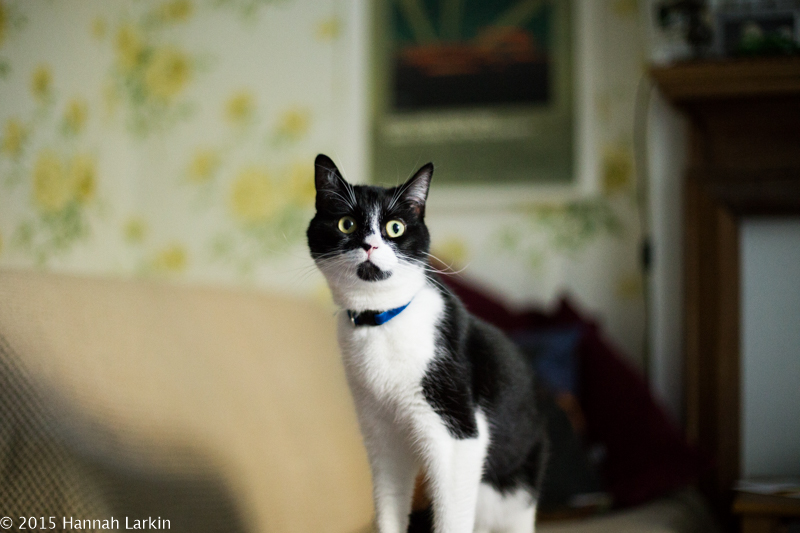 London Family Photography – A Rescue Cat Portrait Session – Poppy