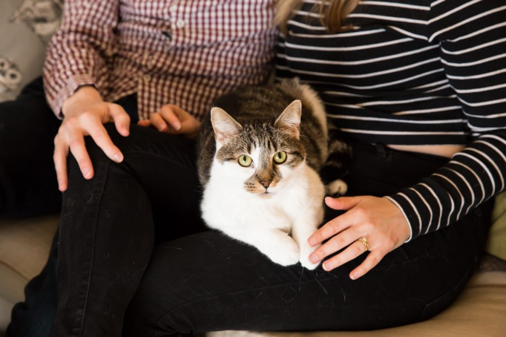Tortoiseshell cat photographed with engagement ring